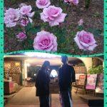 花巻温泉のバラ園、昼と夜どっちがオススメ?
