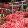 青森県南でのんびりと時間を過ごしたい方へのオススメスポット♪《七戸町》